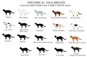 thai-breed-chart