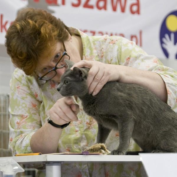 cat show TICA Warszawa 2014