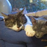Mimi i Fee