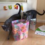 Luna (Haluna) - 3 lata i Nelly