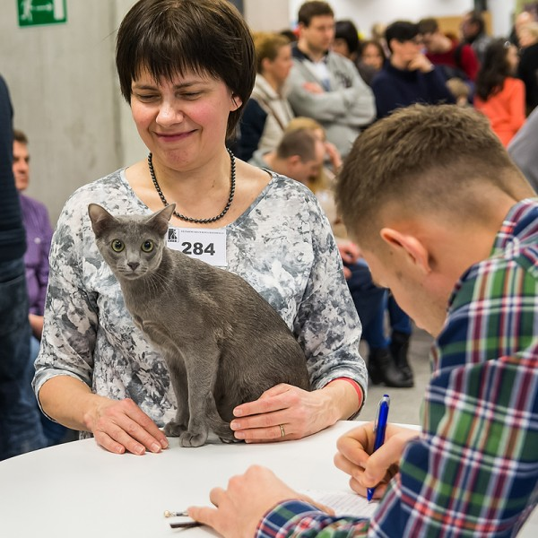 cat show Warsaw 2015