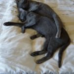 Luna i Nelly