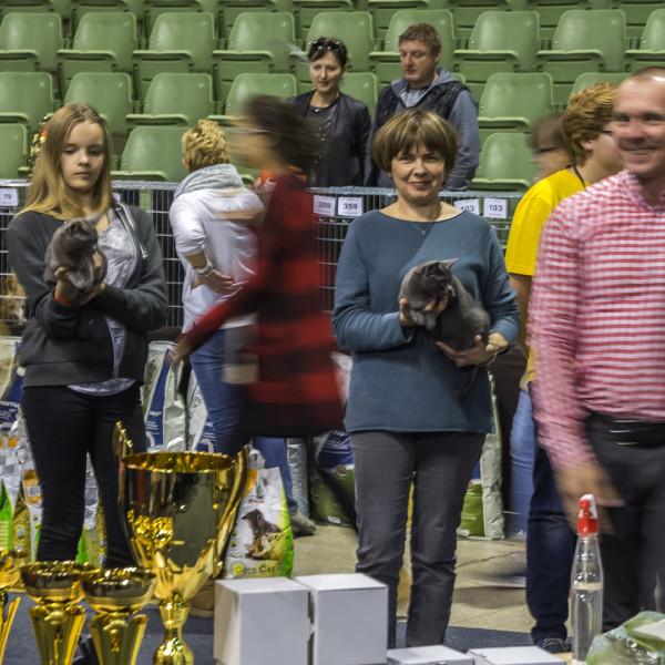 cat show Poznań 2016