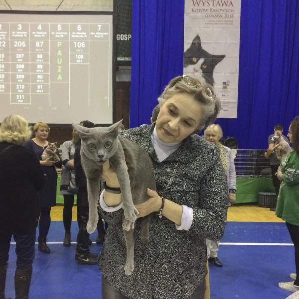 cat show Gdańsk 2018