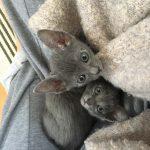 Lapsus i Lilijka